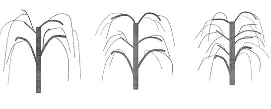 Goji Pflanzen schneiden
