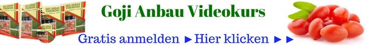 Goji Anbau Videokurs