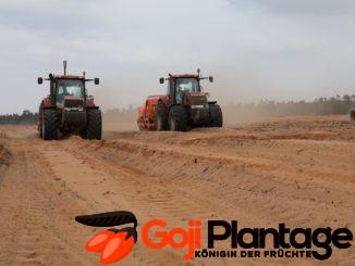 Goji Plantage Marokko Vorbereitungen