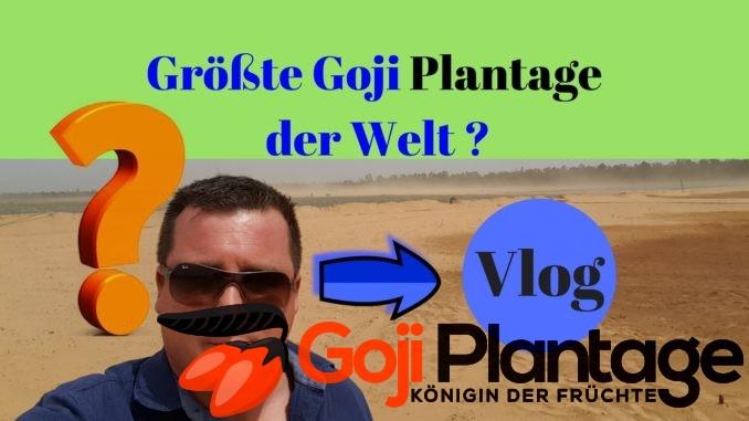 Größte Goji Plantage der Welt