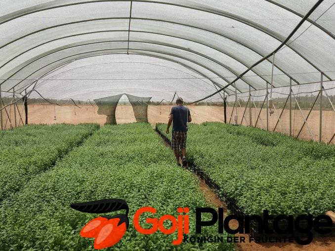 Planung einer Goji Plantage